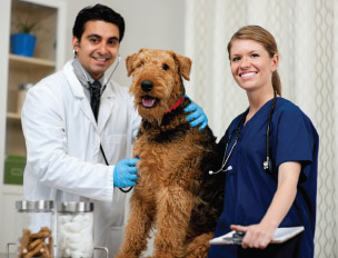 Veterinary Assistant at UGA